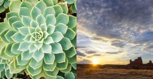 A gorgeous plant and breathtaking sunset represent the natural beauty you'll find at Mariposa.